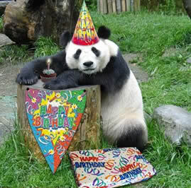 Happy Birthday Panda Bear 5