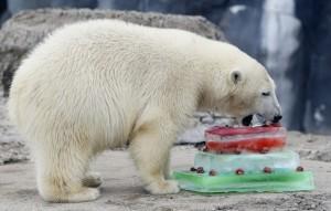 Happy Birthday Polar Bear 10 300×191