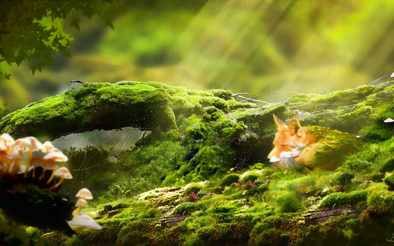 Most Relaxing Desktop Wallpapers The Art Mad Wallpapers