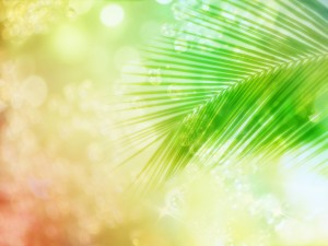 Wedding Background Green 6 300×225