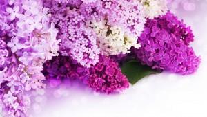 Wedding Background Violet Hd 1 300×169