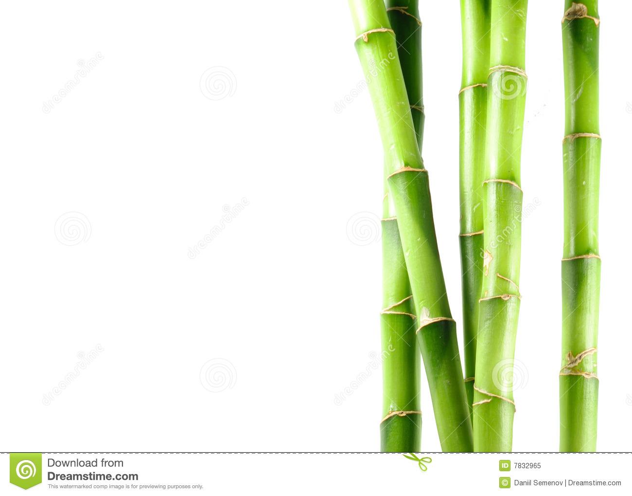 White Bamboo Background 1