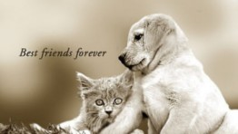 Best Friends Forever Backgrounds 5