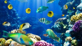 Ocean Fish Wallpaper 2