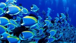 Ocean Life Backgrounds 1