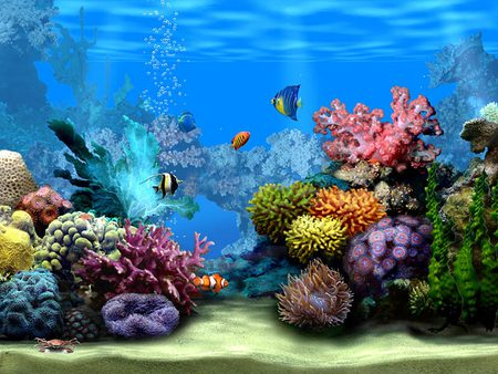 Ocean Life Backgrounds 2