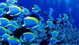Ocean Life Wallpapers 1