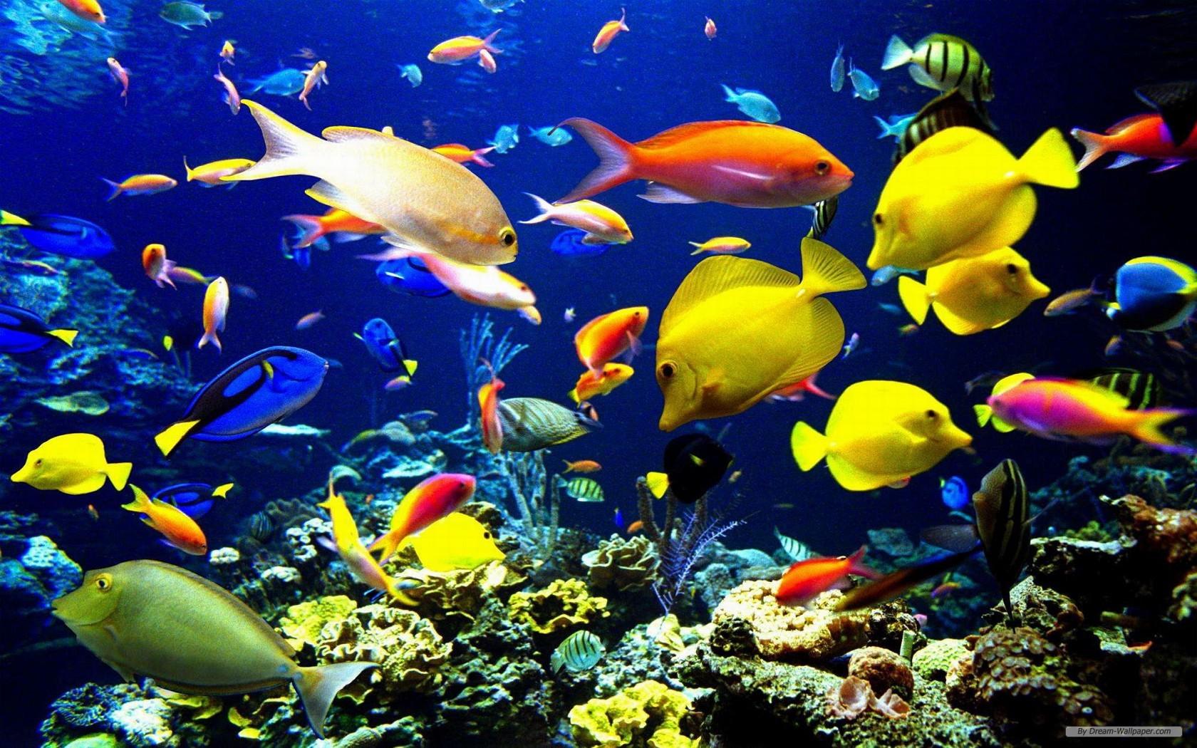 Ocean Life Wallpapers 3