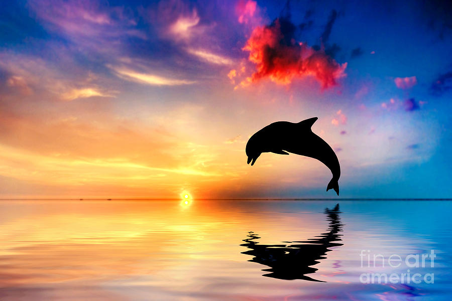 Ocean Sunset With Dolphins 4