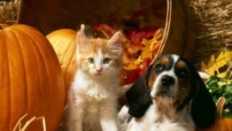 Cute Animal Halloween Wallpaper3