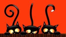 Cute Cat Halloween Backgrounds1 300×169