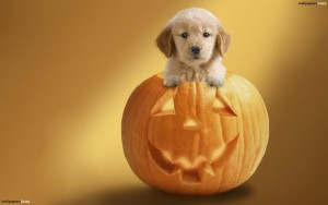 Cute Halloween Wallpapers2 300×188