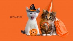 Funny Halloween Wallpaper1 300×169