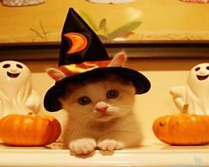 Funny Halloween Wallpaper2 300×240
