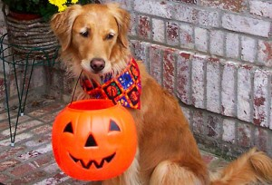 Golden Retriever Wallpaper Halloween1 300×204