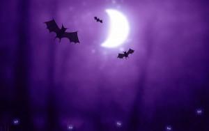 Halloween Bat Wallpaper2 300×188