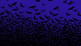 Halloween Bat Wallpaper4 300×225