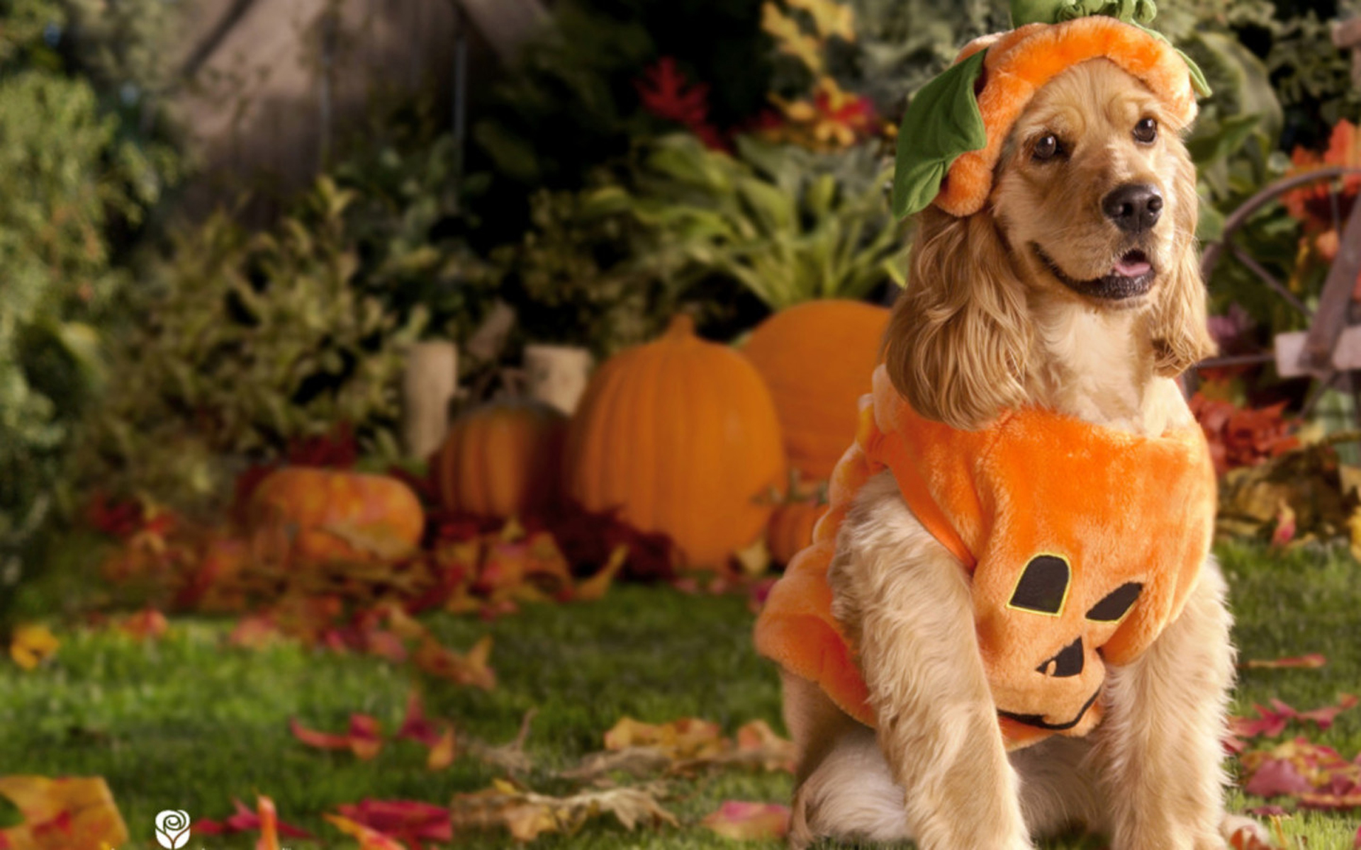 Halloween Wallpaper With Dogs3