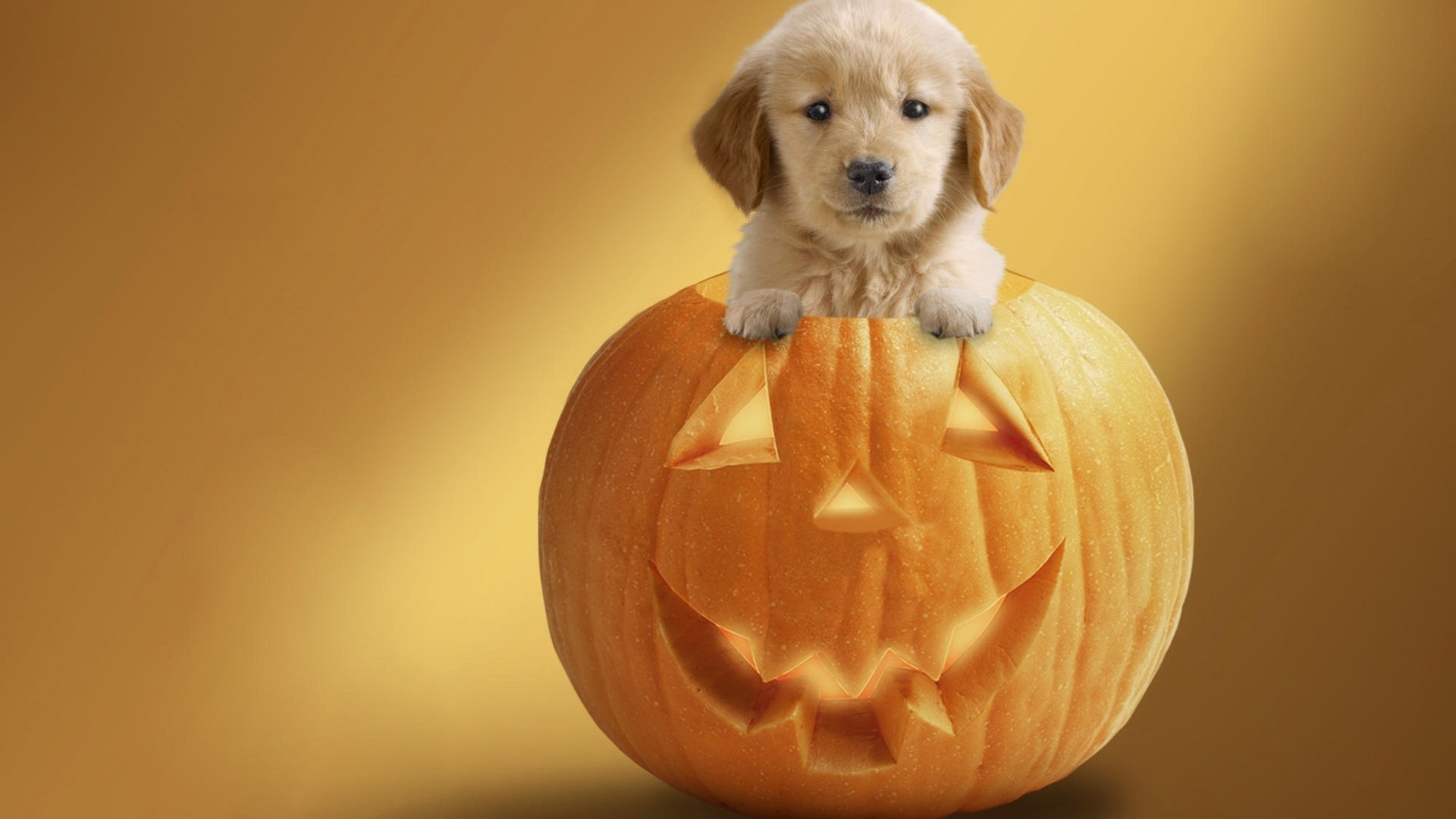 Halloween Wallpaper With Dogs4